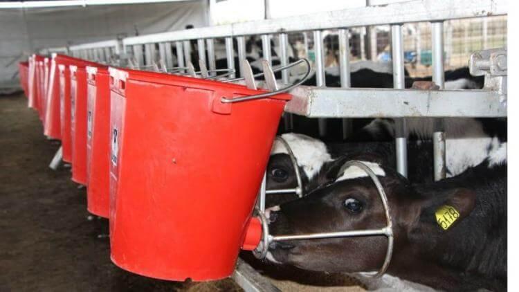 El tambo del Inta Manfredi sumó tecnología en producción y bienestar animal